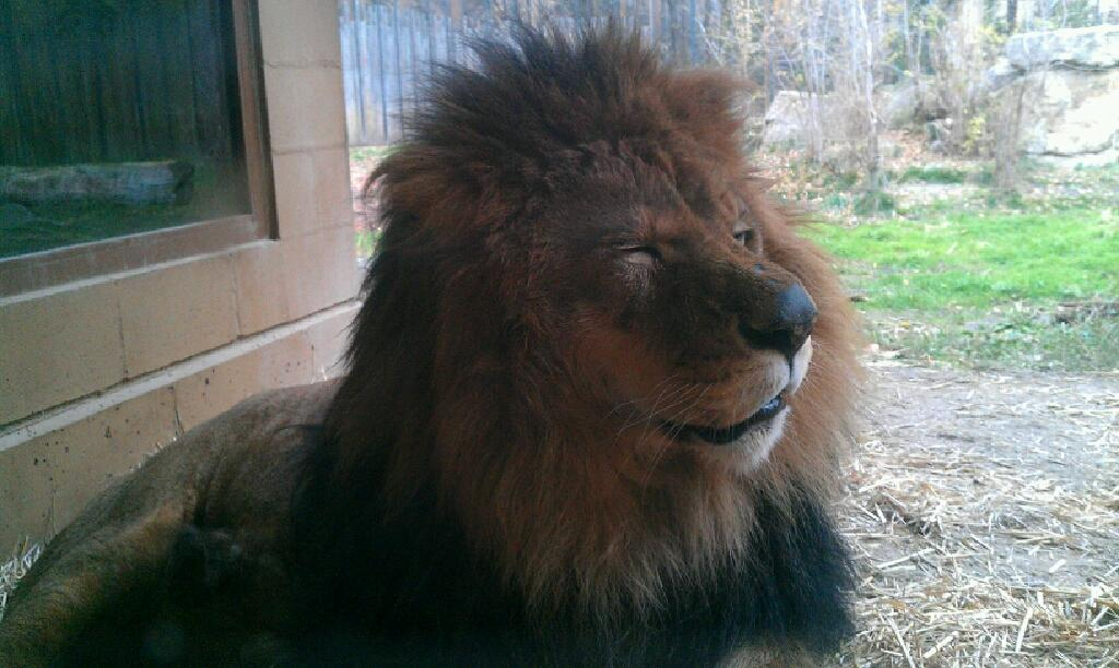 top 10 must dos at zoo boise this winter zoo boise