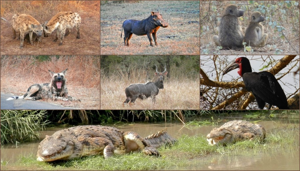 GorongosaAnimalsCollage